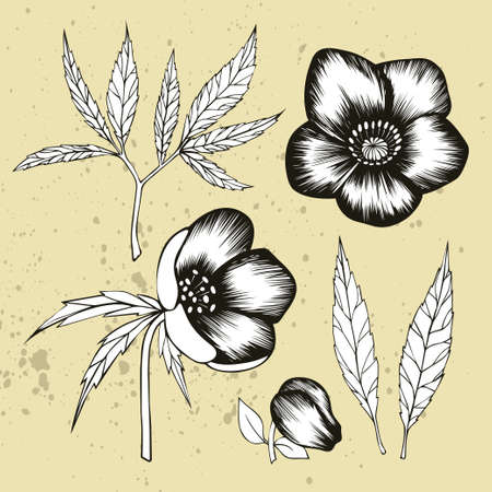 Black and white hellebore floral elements