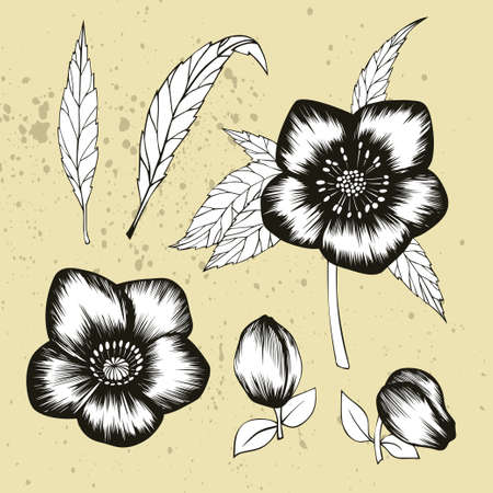 Black and white collection of hellebore floral elements