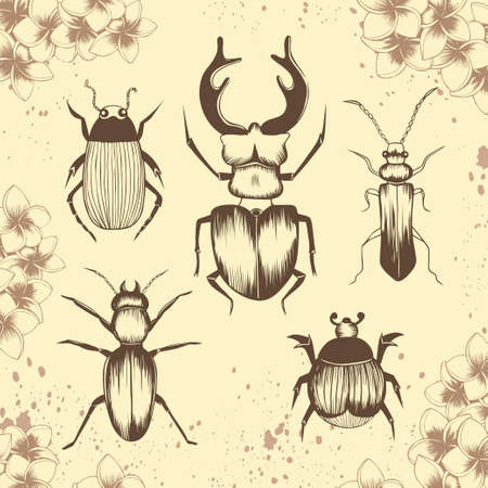 Set of beetles in floral frame