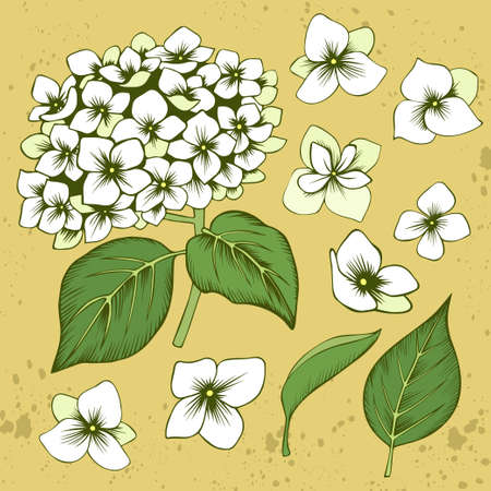 Hand drawn white hydrangea flowers and leaves