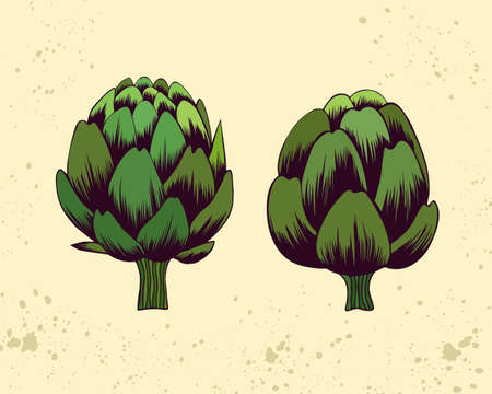 Botanical vector illustration with artichoke flowers