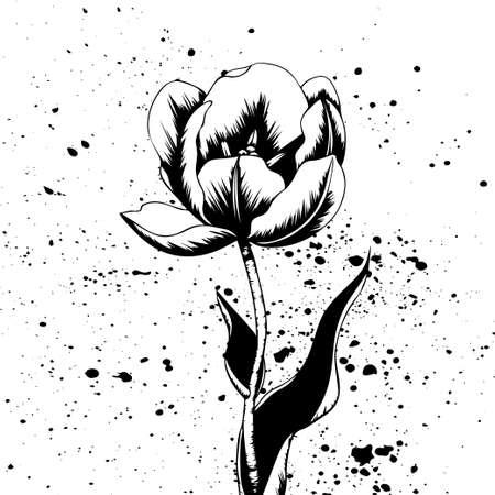 Hand drawn black and white vector tulip Stock Illustratie