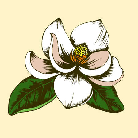 Hand drawn magnolia flower with leaves