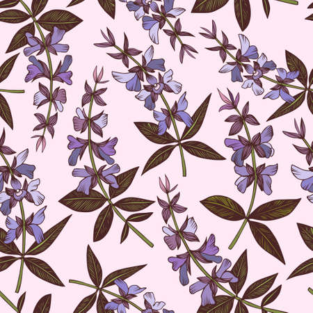 Salvia seamless vector pattern