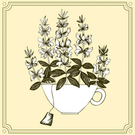 Hand drawn salvia branches in tea cup