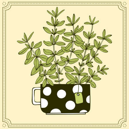 Bunch of thyme branches in tea cup