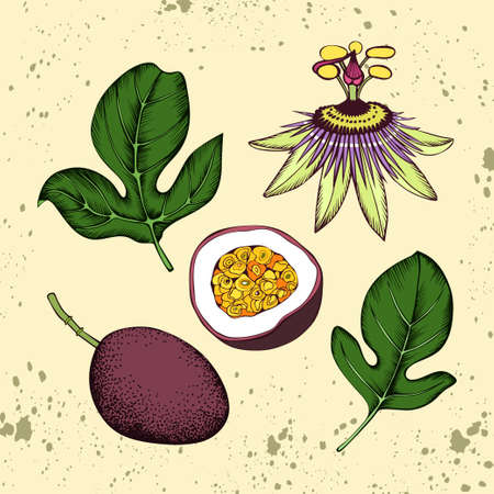 Hand drawn vector passion fruit elements Illustration