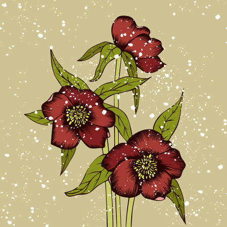Bouquet of hellebores and snow