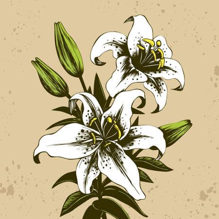 Hand drawn bouquet of white stargazer lilies Иллюстрация