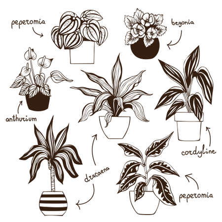 Peperomia, dracaena, cordyline, anthurium and begonia in pots