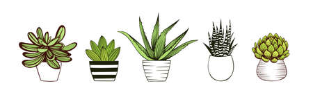 Hand drawn collection of succulents in pots