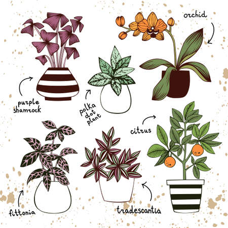 Purple shamrock, polka dot plant, orchid, fittonia, tradescantia and citrus tree in pots