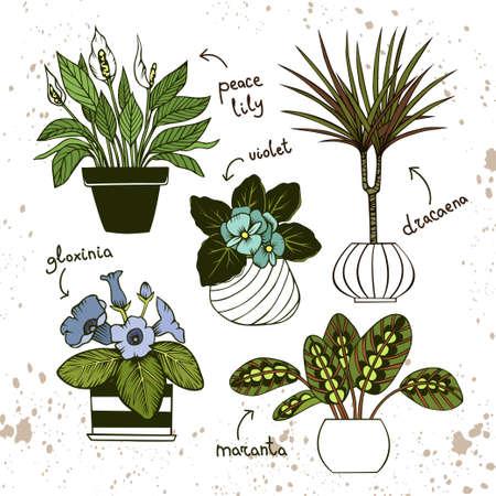 Peace lily, dracaena, violet, gloxinia and maranta in pots