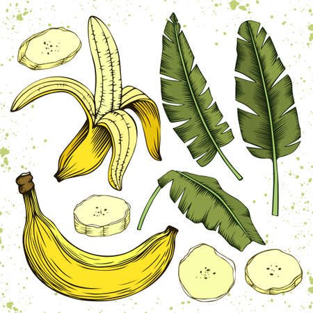 Whole and sliced banana fruits and leaves