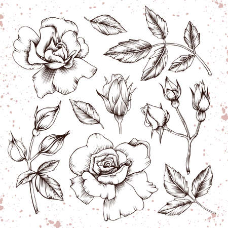 Set of vector roses. Hand drawn flowers, leaves and buds