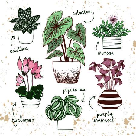 Hand drawn collection of houseplants in pots on white background. Purple shamrock, calathea, caladium, mimosa, cyclamen, peperomia Ilustración de vector