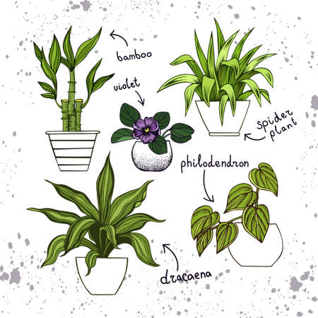 Collection of houseplants. Lucky bamboo, violet, spider plant, dracaena, philodendron Illustration