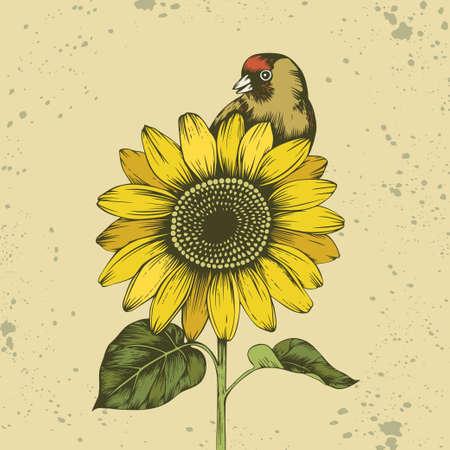 Finch sits on sunflower. Hand drawn vector illustration. Beige textured background