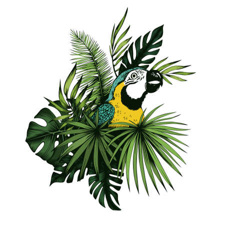 Blue and yellow macaw parrot with palm and monstera leaves. Hand drawn vector illustration