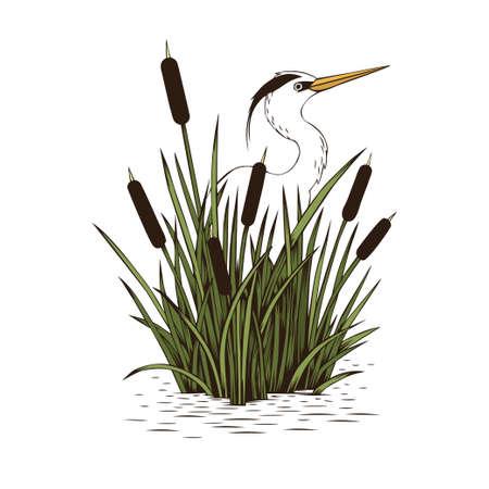 Hand drawn vector heron in cattail grove