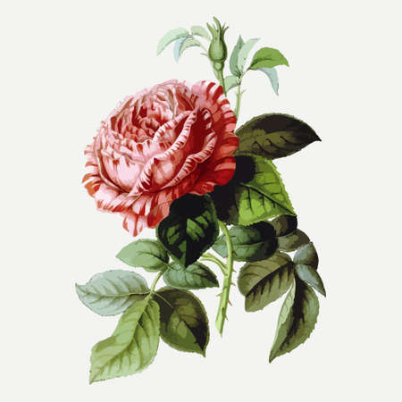 Vintage drawing of flower. Vector illustration. For t shirt printing and poster design. Graphic tee and printed tee Illustration