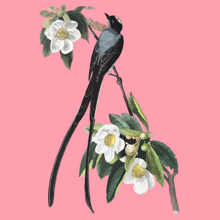 Vintage drawing of flower and bird vector illustration. For t-shirt printing graphic printed t-shirt.