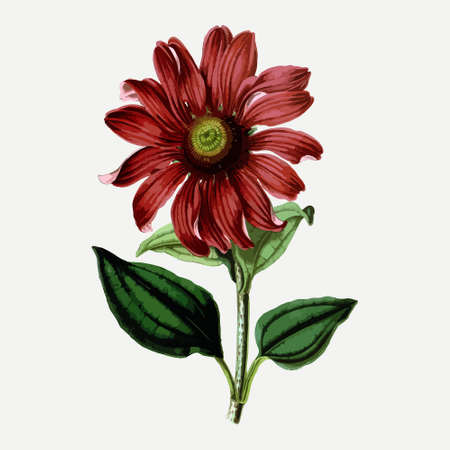 Vintage drawing of flower. Vector illustration. For t-shirt printing and poster design. Graphic tee and printed tee.