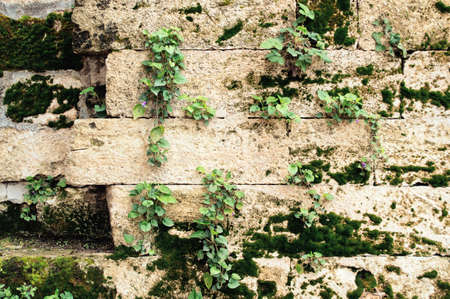 Wall of an old stone with green moss and flowers. Background with plants.