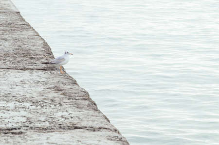 One seagull on the pier. Minimalistic colors.
