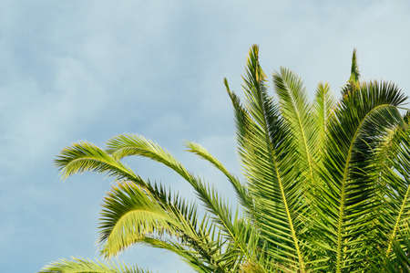 Background with a green palm and blue sky