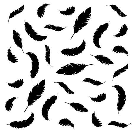 Vector illustration of feathers Illusztráció