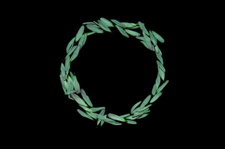 Creative concept. Circle from green petals on a black background. Banque d'images