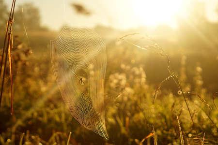 spiderweb: Macro spiderweb with dew drops