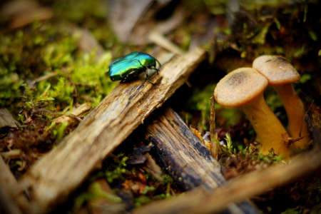 Macro ground with beetle and mushrooms