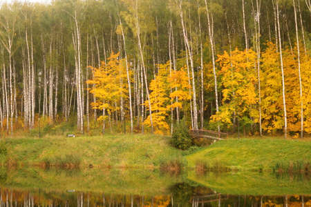 Autum birches park and river Stock Photo