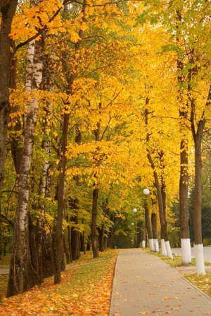 Autumn trees alley Stock Photo