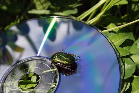lazer: A macro shot of a bug on a lazer disc