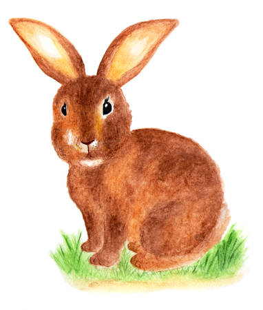 Brown cute rabbit. Furry hare. Watercolor illustration. Stock Photo