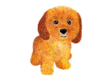 Dog. Ð¡ockapoo. Watercolor illustration. Stock Photo