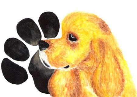 American Cocker Spaniel. Dog. Watercolor illustration. Stock Photo