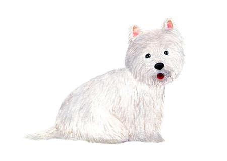 West Highland White Terrier. Dog. Watercolor illustration.