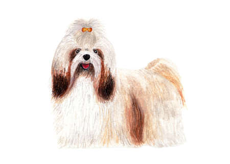 Shih Tzu with long hair. Dog. Grooming care. Watercolor. Stock Photo