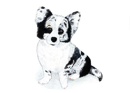 Welsh corgi cardigan, terrier. Watercolor illustration. Welsh corgi cardigan, black and white color. A breed of strong build, a powerful and hardy dog ??on short paws. Stock Photo
