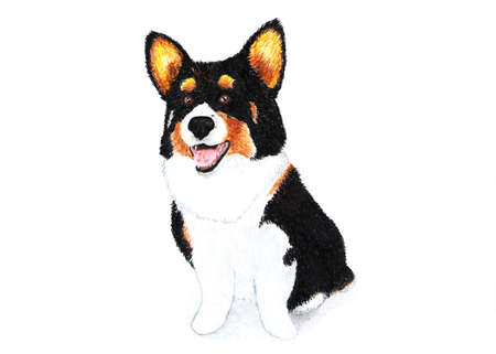 Welsh corgi cardigan, terrier. Watercolor illustration. Welsh corgi cardigan, black-brown color. A breed of strong build, a powerful and hardy dog ??on short paws.