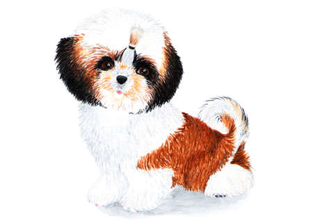 Puppy Shih Tzu with long hair. Watercolor illustration. Puppy Shih Tzu with braided bow. Lovely domestic pet. Drawing for the cover of the notebook, passports for animals, fabrics. Stock Photo