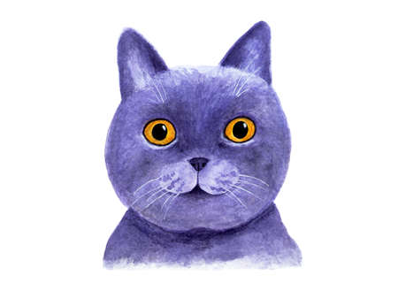 Portrait of a British blue cat. Watercolor illustration. Lovely muzzle of a British blue cat. Print for T-shirts, fabrics, cover for notebooks. Drawing for printing, graphic design.