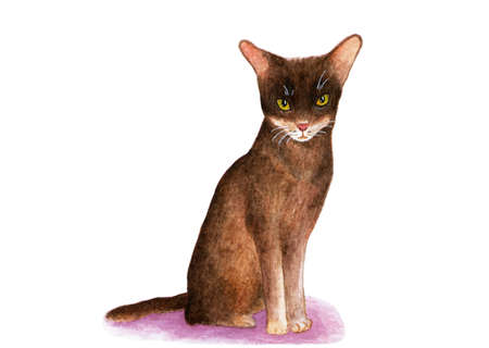 Abyssinian cat. Watercolor illustration. The Abyssinian cat sits and looks into the camera. Picture of a cat on a white background. Print print.