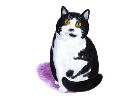 Black and white cat on white background. Watercolor illustration. Fluffy and fat black and white cat. Portrait of a cat for printing. Sketch for creating illustrations. Stock Photo