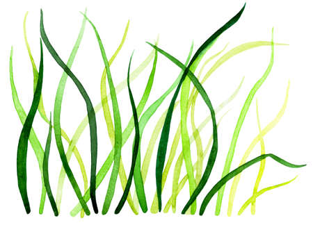Fresh spring grass. Watercolor illustration.Grass illuminated by the rising sun. Background for design, printing on paper, fabrics. Illustration for advertising natural cosmetics.