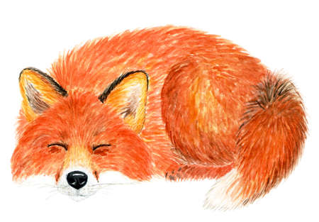Fox sleeping curled up ring. Watercolor illustration. The Fox sleeps on the ground curled up. Background for design, printing on paper, fabrics. Illustration for advertising. Stock Photo